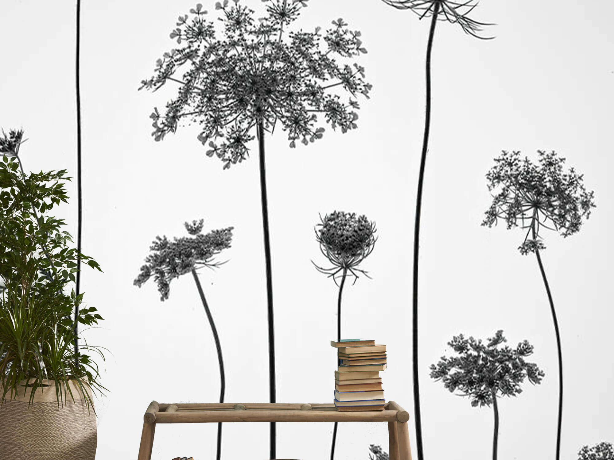 Cow parsley in black and white 6