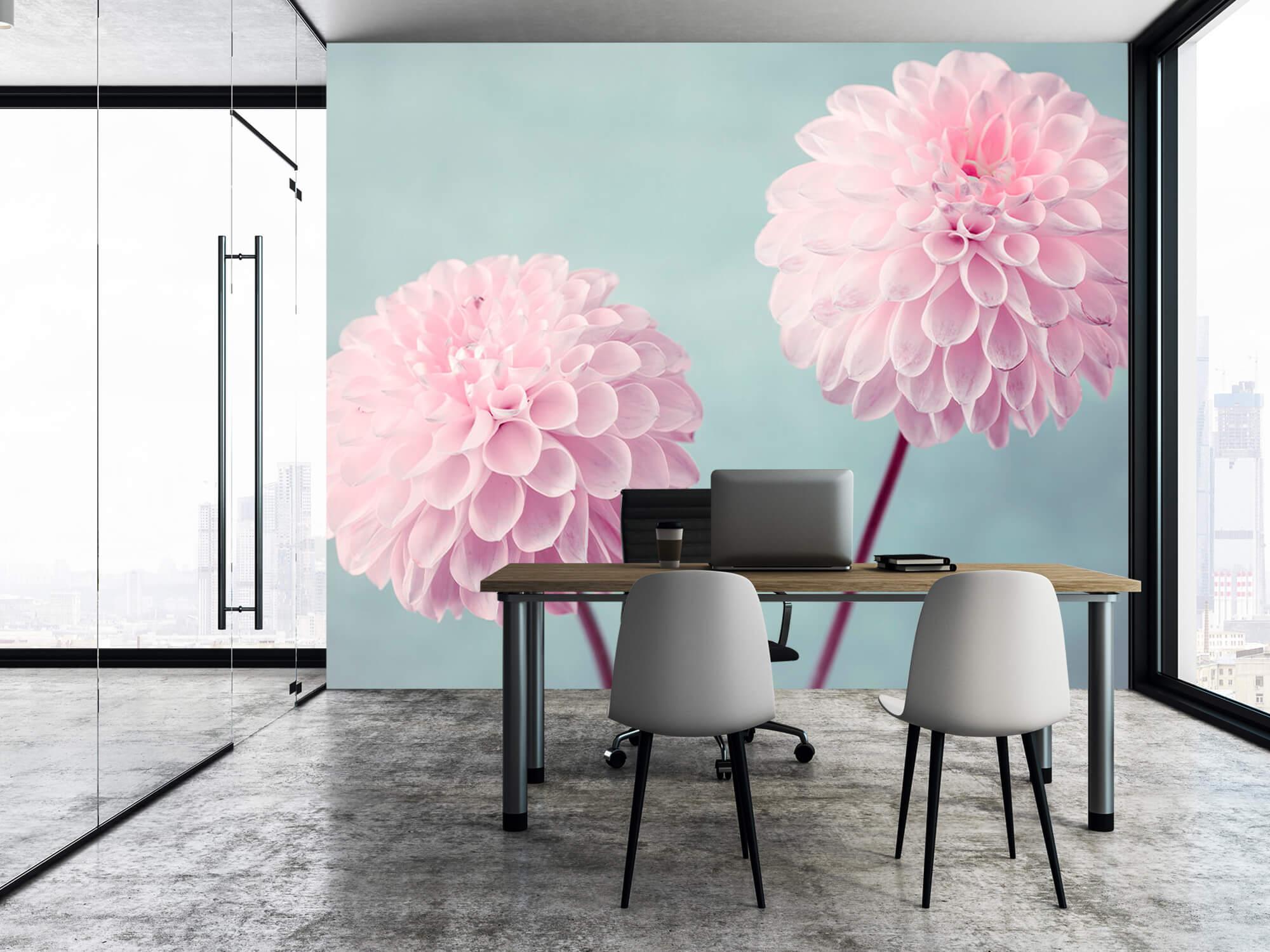 Two Dahlia Flowers 5