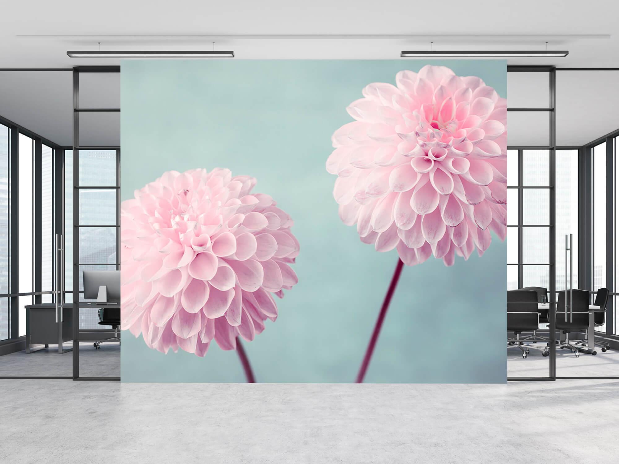 Two Dahlia Flowers 12