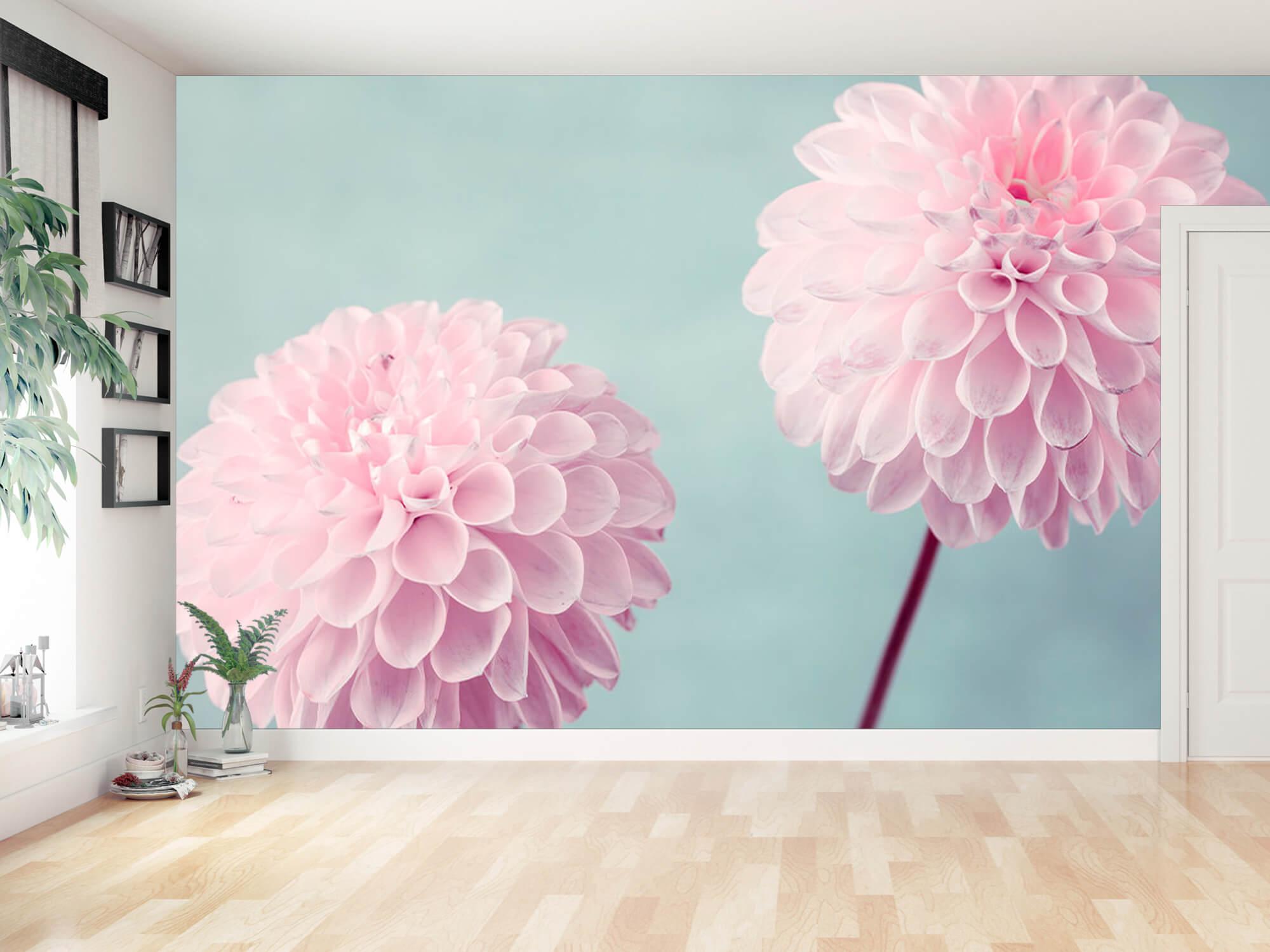 Two Dahlia Flowers 16