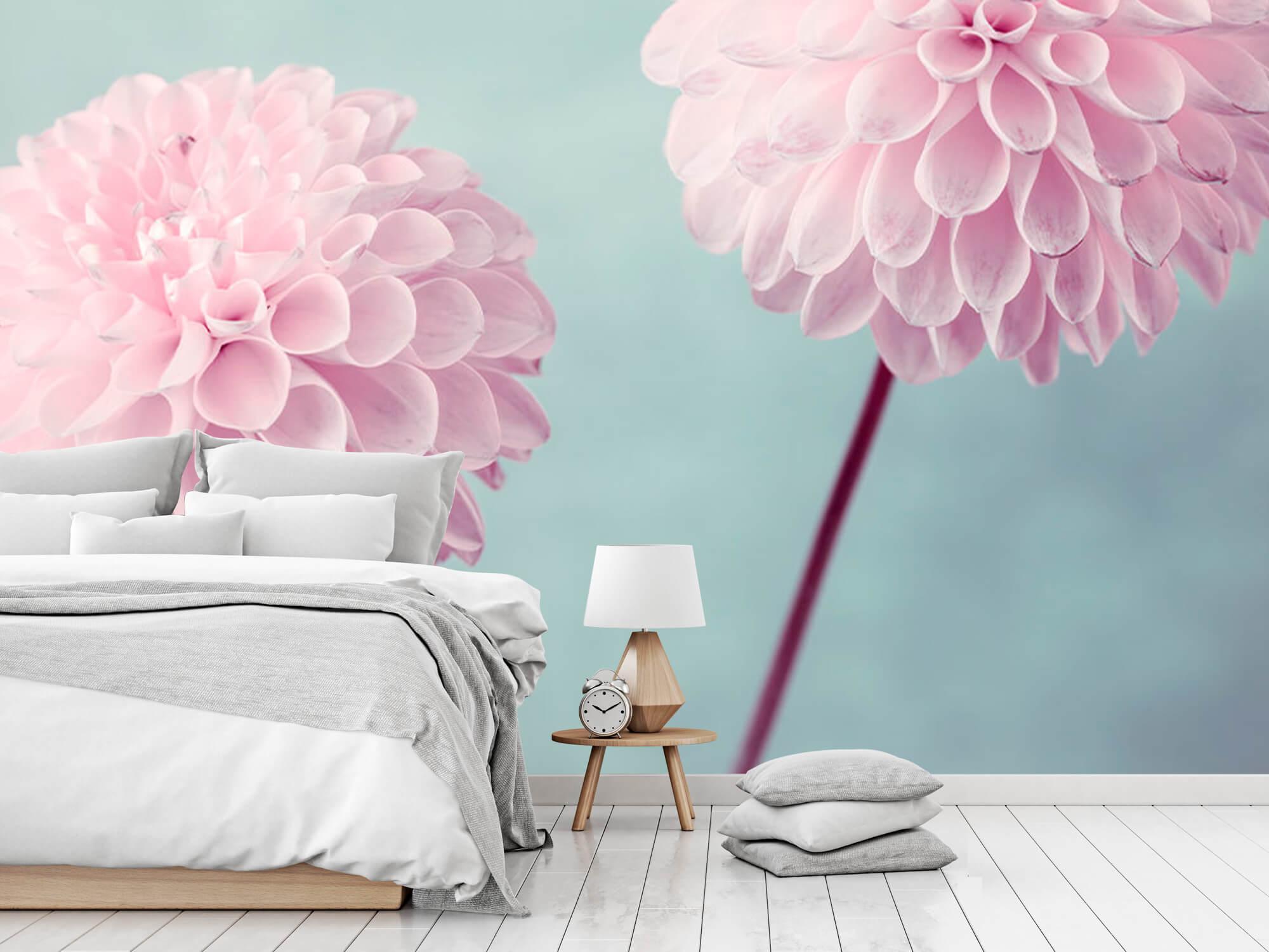 Two Dahlia Flowers 8