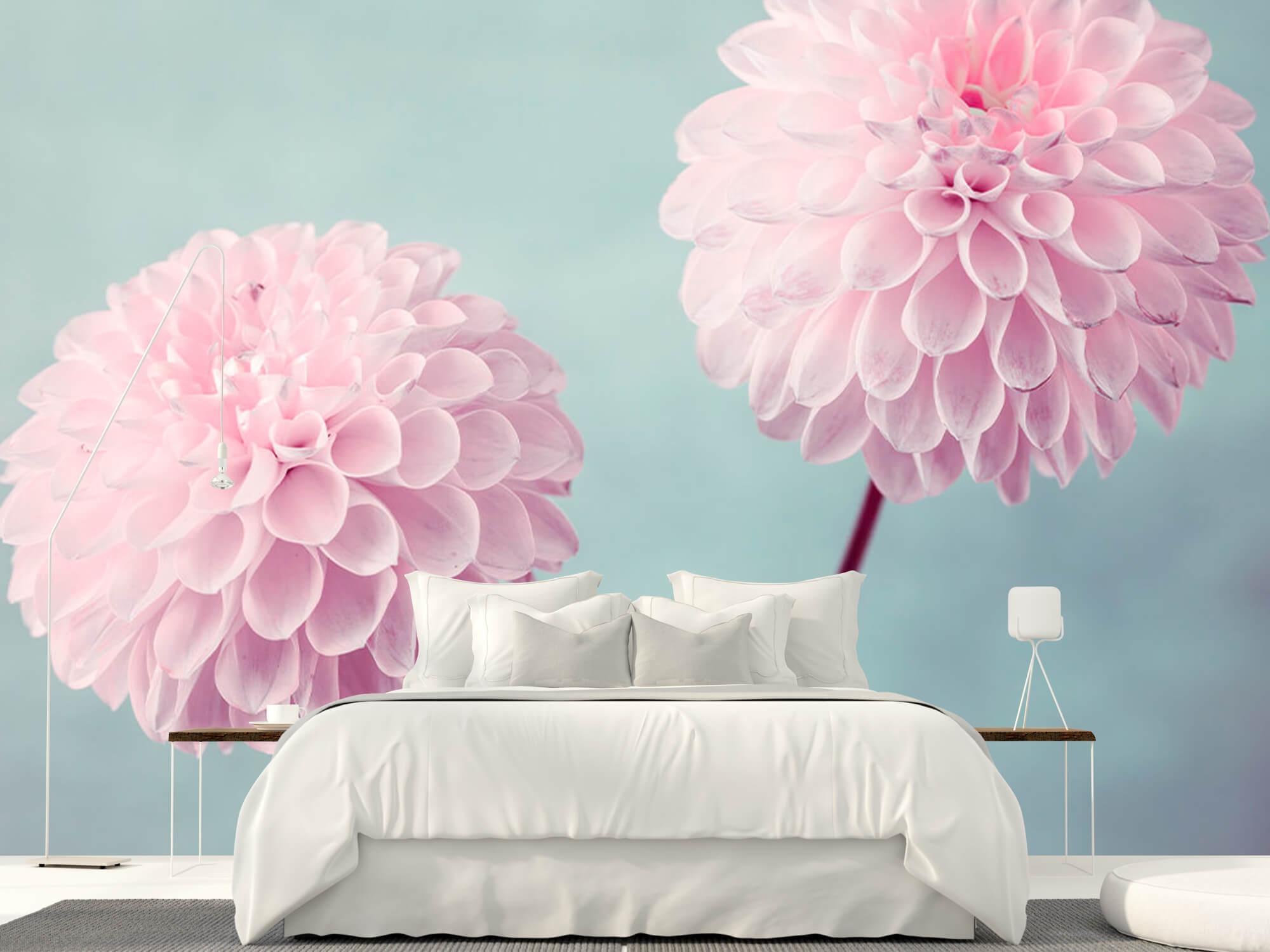 Two Dahlia Flowers 11