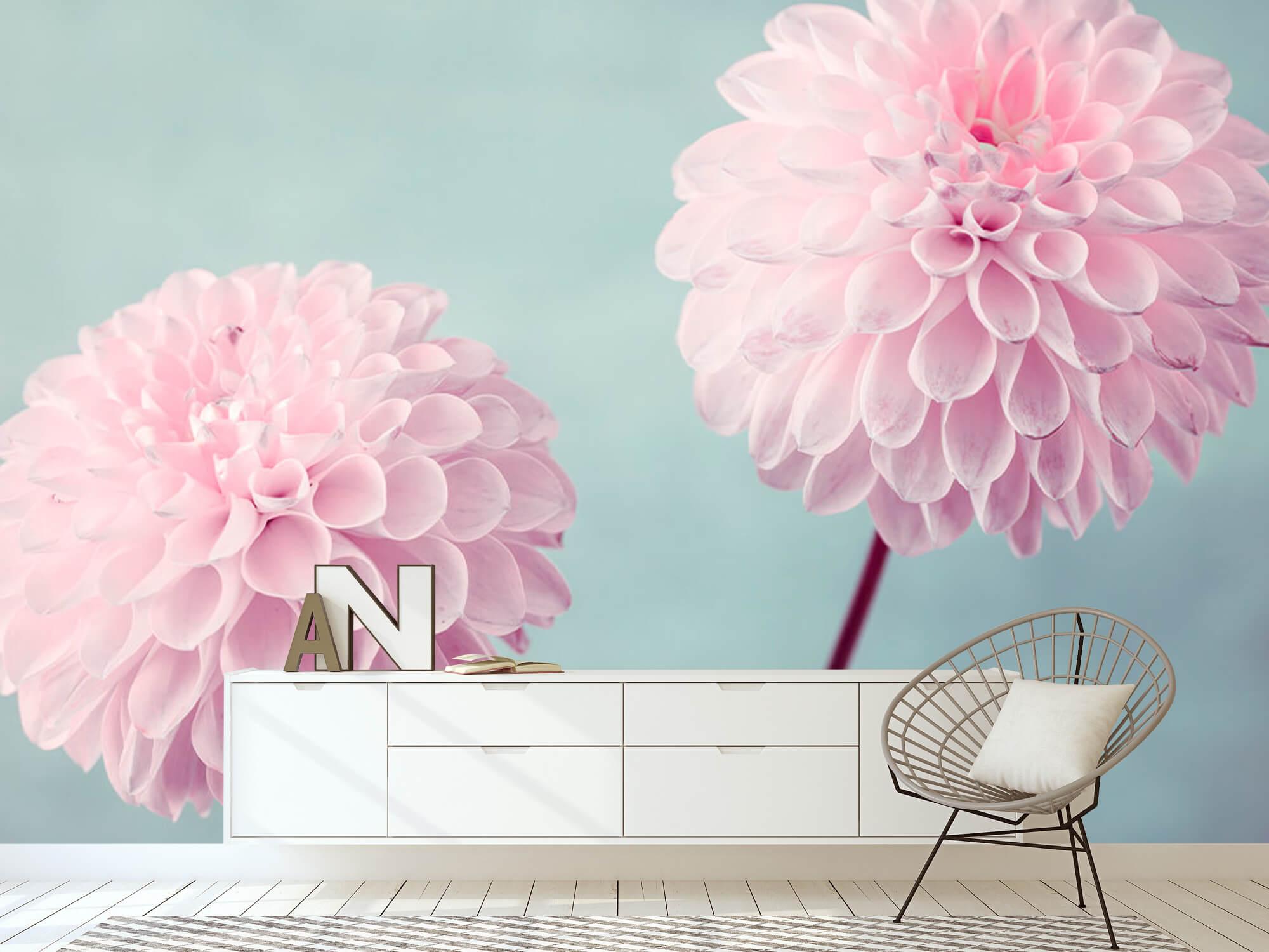 Two Dahlia Flowers 9