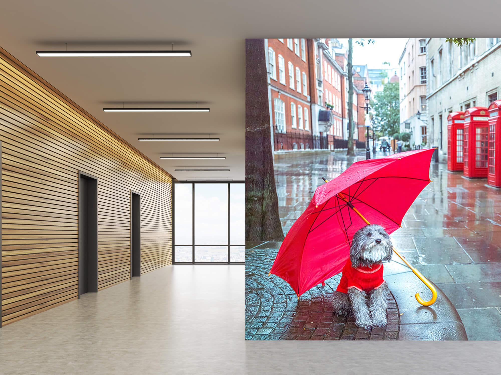 Dog with umbrella 6