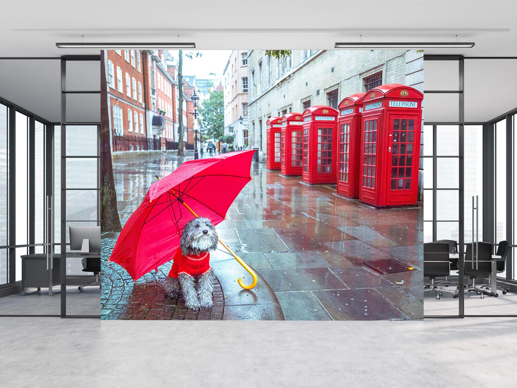 Dog with umbrella 2