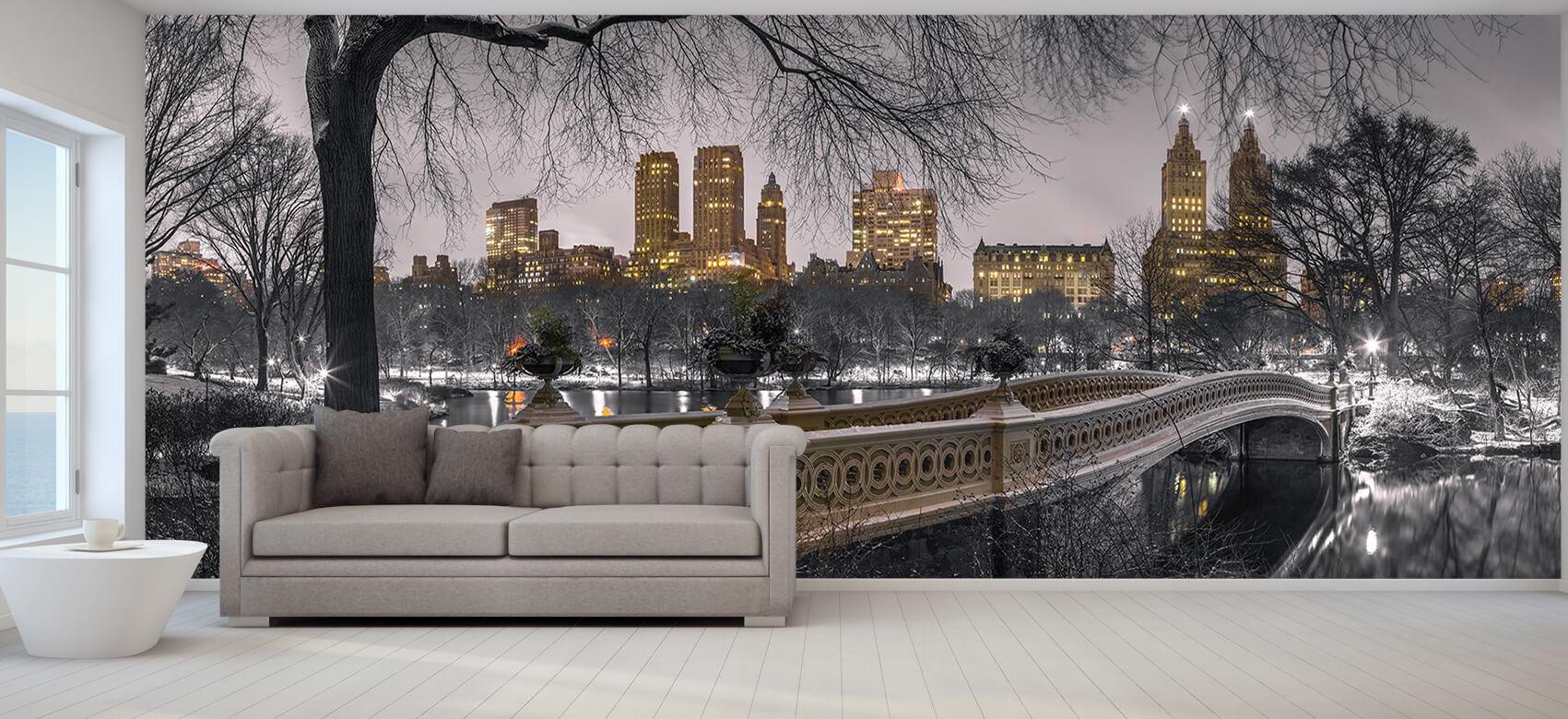 Central park and Manhattan 5